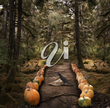 Horror Background With  Spooky Trees And  Pumpkins
