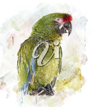 WatercolorGreen Parrot Image.Digital Painting