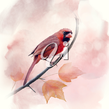Male Northern Cardinal watercolor painting