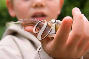 A young child playing with a snail