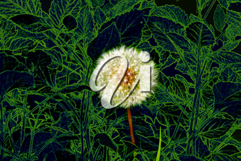 dandelion on a background of green leaves