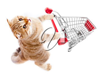 Royalty Free Photo of a Cat With a Shopping Cart