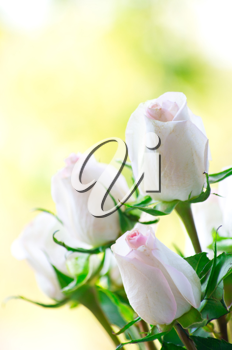 Royalty Free Photo of a Bouquet of Roses