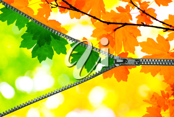 Royalty Free Photo of Leaves