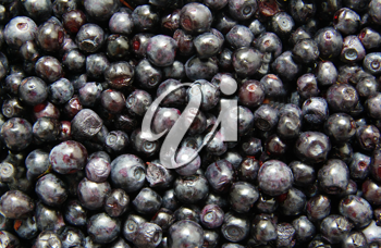 Royalty Free Photo of Blueberries