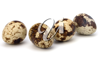 quail eggs isolated on white background close up