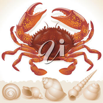 Royalty Free Clipart Image of a Red Crab and Shells