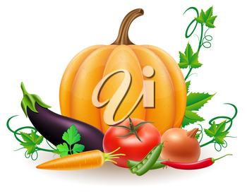 pumpkin and autumn harvest vegetables vector illustration isolated on white background