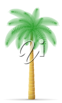 palm tree vector illustration isolated on white background