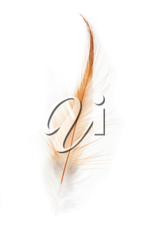orange feathers on a white background