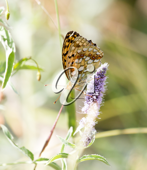 butterfly in nature. close-up