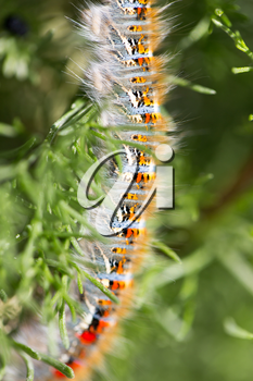 caterpillar on a plant in the nature. macro