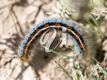 caterpillar on the ground in the nature close-up