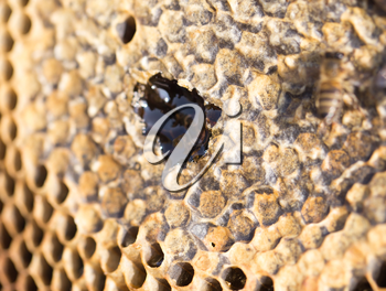 frame with honey in the apiary