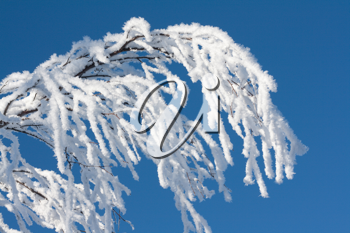 Royalty Free Photo of a Snow Covered Branch
