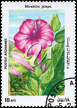 AFGHANISTAN - CIRCA 1985: A Stamp printed in AFGHANISTAN shows image of a Mirabilis jalapa, from the series Flowers, circa 1985