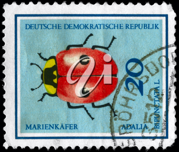 GERMAN DEMOCRATIC REPUBLIC - CIRCA 1968: A Stamp printed in GERMAN DEMOCRATIC REPUBLIC shows the image of a Ladybug with the description Adalia bipunctata L. from the series Insects, circa 1968