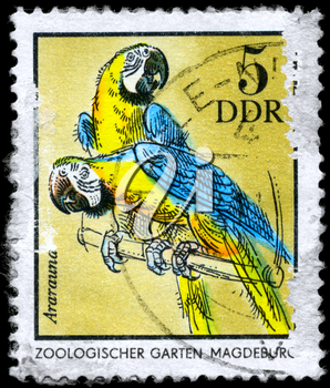 GDR - CIRCA 1975: A Stamp shows image of a blue and yellow Macaws with the inscription Ararauna, Magdeburg Zoo, from the series German Zoological Gardens, circa 1975