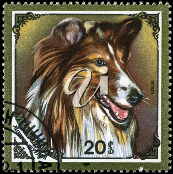 MONGOLIA - CIRCA 1984: A Stamp printed in MONGOLIA shows image of a Collie from the series Dogs, circa 1984