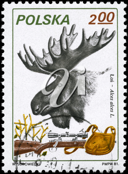POLAND - CIRCA 1981: A Stamp printed in POLAND shows image of a Moose, Rifle and Pouch with the description Alces alces L., series, circa 1981