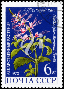 USSR - CIRCA 1972: A Stamp printed in USSR shows the Orthosiphon stamineus, from the series Medicinal Plants, circa 1972