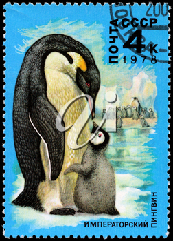 USSR - CIRCA 1978: A Stamp printed in USSR shows image of a Emperor Penguin and Chick from the series Antarctic Fauna, circa 1978