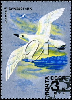 USSR - CIRCA 1978: A Stamp printed in USSR shows image of a Whitewinged Petrel from the series Antarctic Fauna, circa 1978