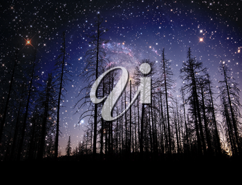 Royalty Free Photo of a Forest at Night