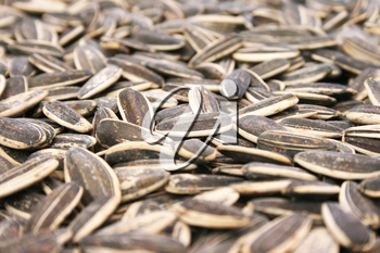 Royalty Free Photo of Sunflower Seeds