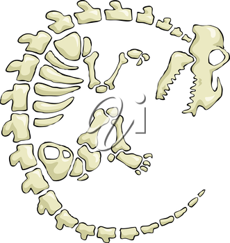 Royalty Free Clipart Image of a Dinosaur Skeleton