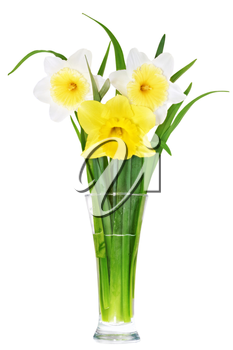 Beautiful spring flowers in vase: yellow-white, orange narcissus (Daffodil). Isolated over white.