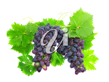 Black grape on cane vine with leafe. Isolated over white