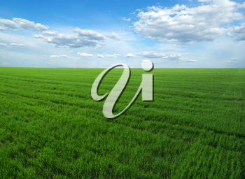 Royalty Free Photo of a Green Field and Blue Sky