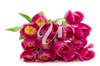 Royalty Free Photo of a Bouquet of Pink Tulips