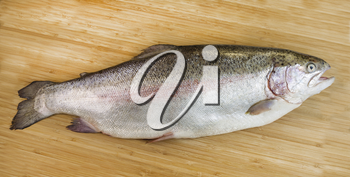 Horizontal photo of large trout on Natural Bamboo Wood background