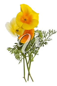Beautiful yellow and white wild flowers on white background