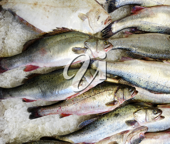 Fresh raw seafood on ice for the open market in close up top view format