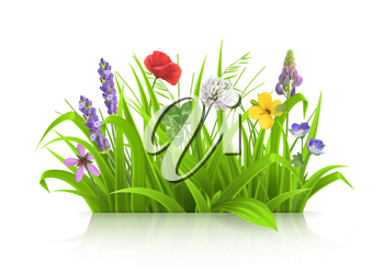 Wild flowers, forb alpine pastures. Spring grass 3d realistic vector
