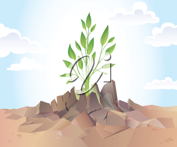 The young green sprout is breaking the dry hard soil.