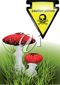 poisonous mushrooms amanita and sign pioson caution