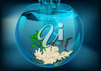 aquarium  with fish on abstract dark background.