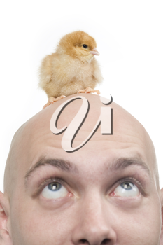 Image of amazed man looking upwards at his bald head with cute chick on it