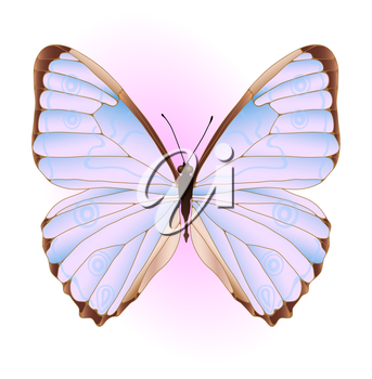 Vector illustration of pink and blue butterfly
