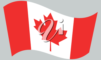 Flag of Canada waving on gray background