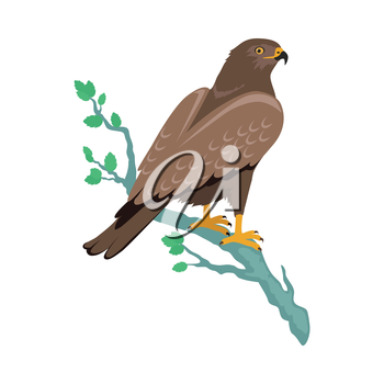 Hawk vector. Predatory birds wildlife concept in flat style design. World fauna illustration for prints, posters, childrens books illustrating. Beautiful hawk seating on brunch isolated on white.