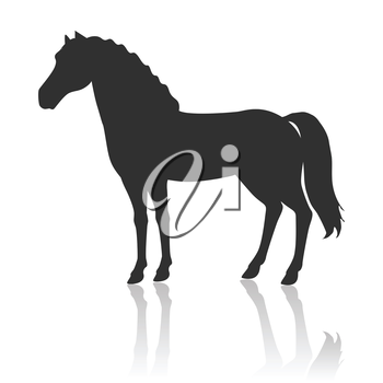 Black horse vector. Flat design. Domestic animal. Country inhabitants concept. For farming, animal husbandry, horse sport illustrating. Agricultural species. Isolated on white