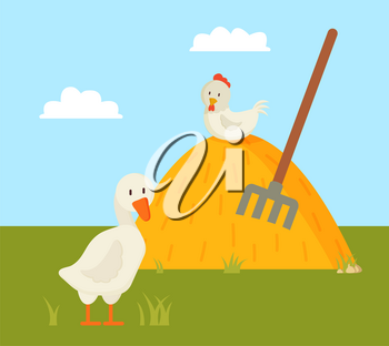Rural life goose and chick on farm yard color card, colorful image of domestic birds on walk, sunny day and sky with fluffy clouds vector illustration