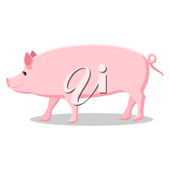 Pink pig with curly tail isolated cartoon vector illustration on white background. Farm domestic animal that produces meat and fat.