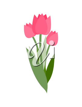 Spring flowers vector, isolated icon of tulips with long leaves. Symbol of international womens day, bouquet decoration. Bright decor flora blooming