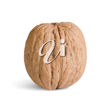 one walnut isolated on a white background